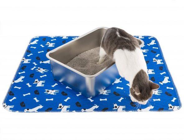 Recomendaciones para cuidar a un gato